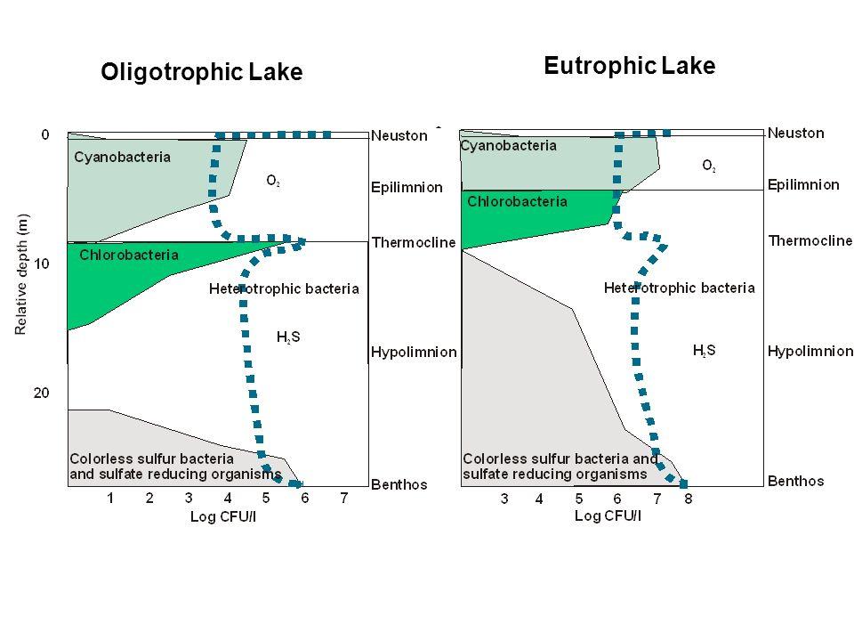Eutrophic Lake Oligotrophic Lake