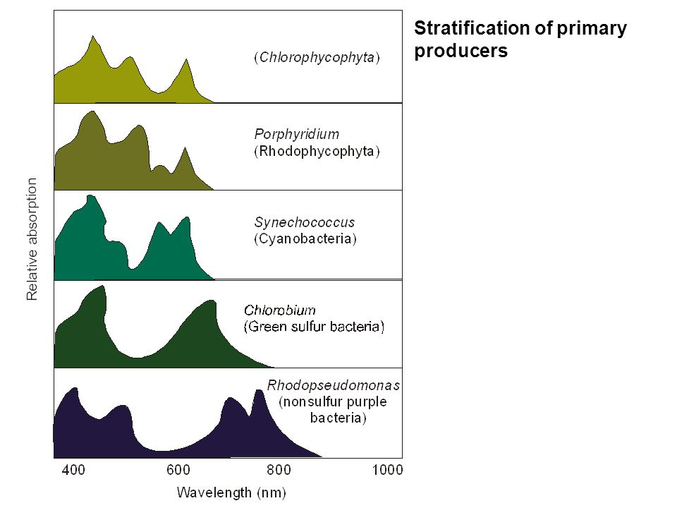 Stratification of primary producers