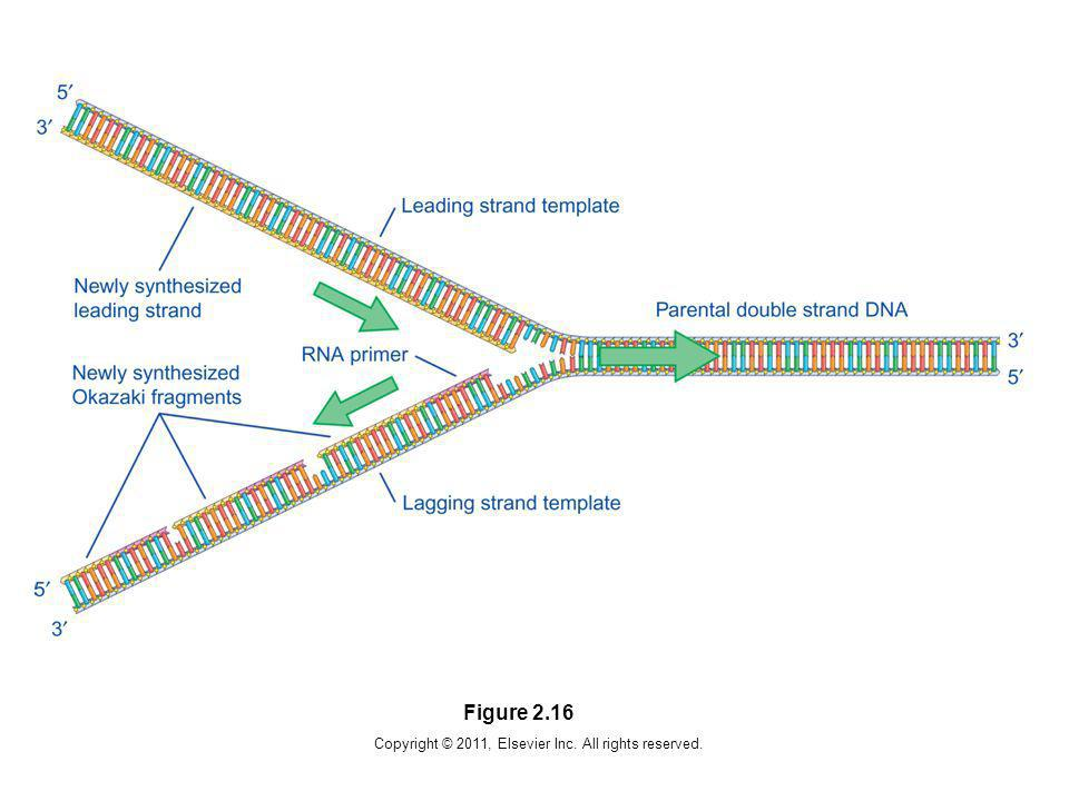 Copyright © 2011, Elsevier Inc. All rights reserved.
