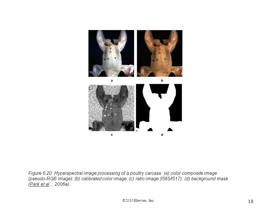 Figure 6.20: Hyperspectral image processing of a poultry carcass: (a) color composite image (pseudo-RGB image); (b) calibrated color image; (c) ratio image (I565/I517); (d) background mask (Park et al ., 2006a).