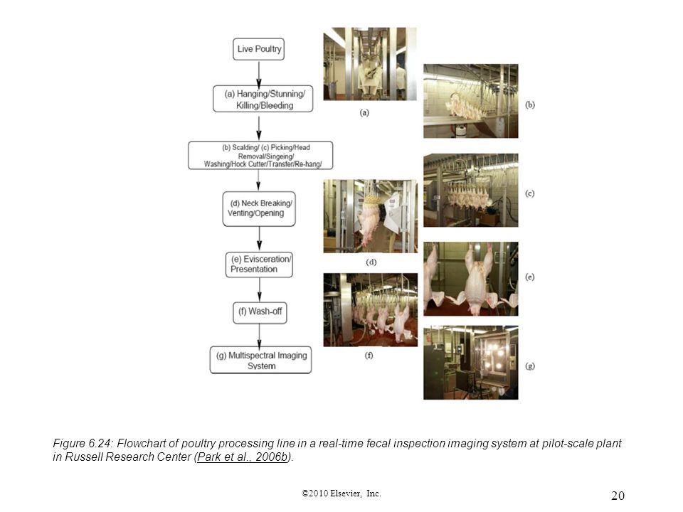Figure 6.24: Flowchart of poultry processing line in a real-time fecal inspection imaging system at pilot-scale plant in Russell Research Center (Park et al., 2006b).