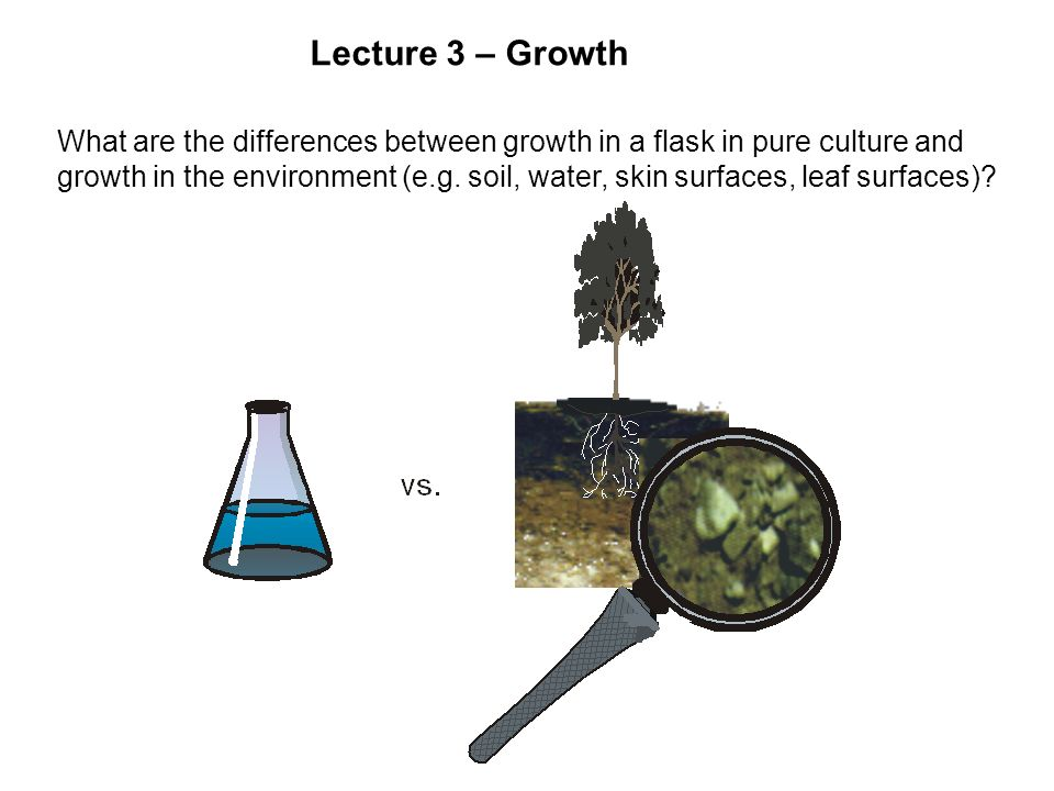 Lecture 3 – Growth