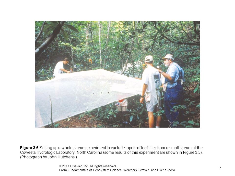 Figure 3.6 Setting up a whole-stream experiment to exclude inputs of leaf litter from a small stream at the Coweeta Hydrologic Laboratory, North Carolina (some results of this experiment are shown in Figure 3.5). (Photograph by John Hutchens.)