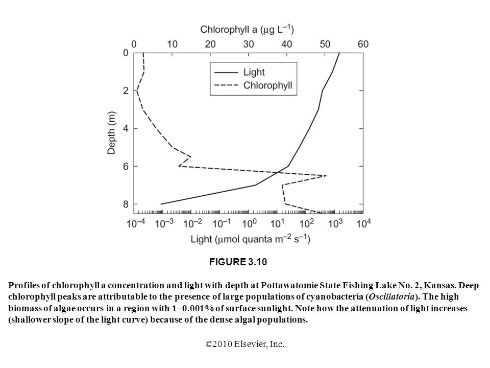 FIGURE 3.10 Profiles of chlorophyll a concentration and light with depth at Pottawatomie State Fishing Lake No. 2, Kansas. Deep.