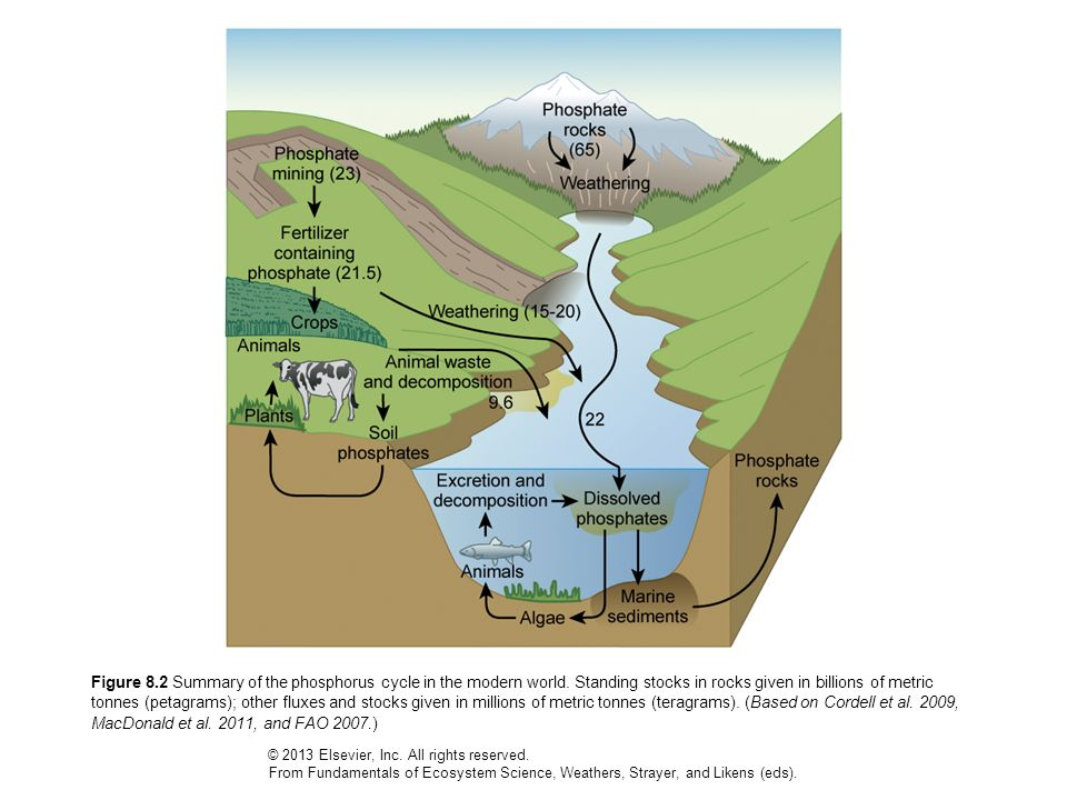 Figure 8. 2 Summary of the phosphorus cycle in the modern world