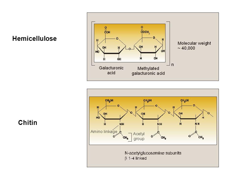 Hemicellulose Chitin