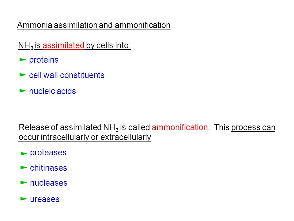 Ammonia assimilation and ammonification
