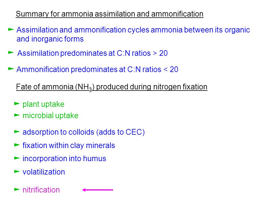 Summary for ammonia assimilation and ammonification