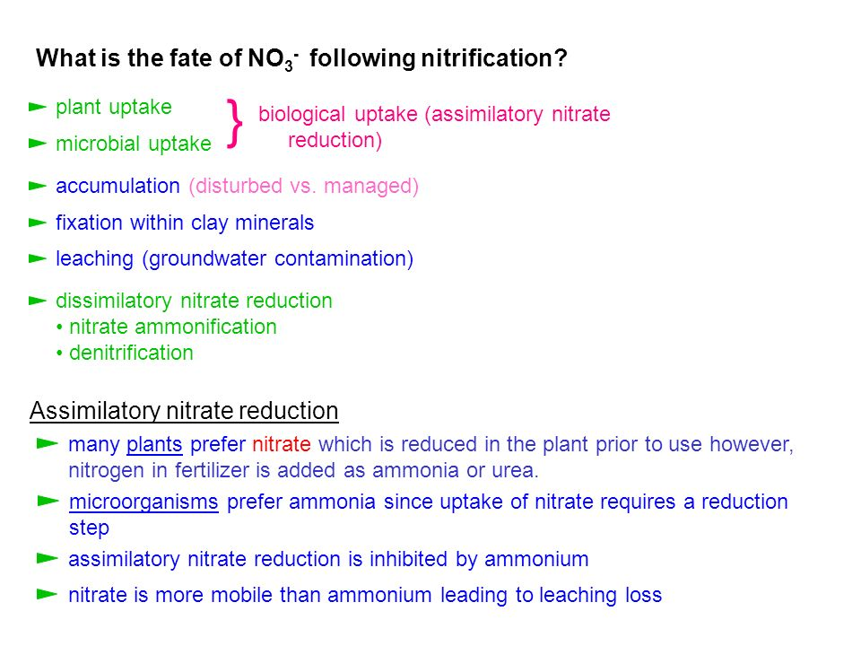 } What is the fate of NO3- following nitrification