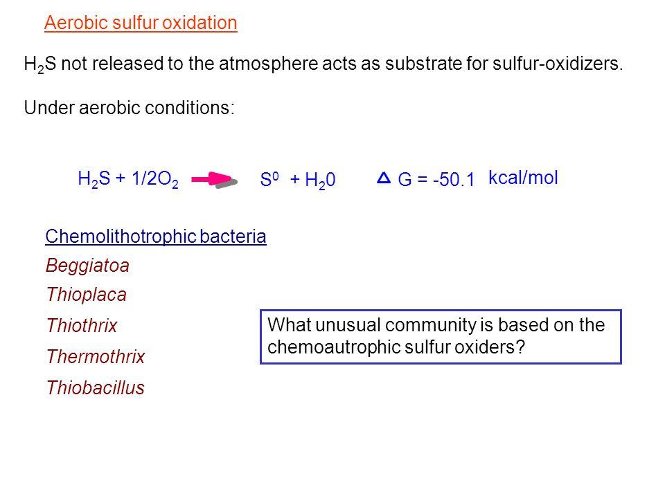 Aerobic sulfur oxidation