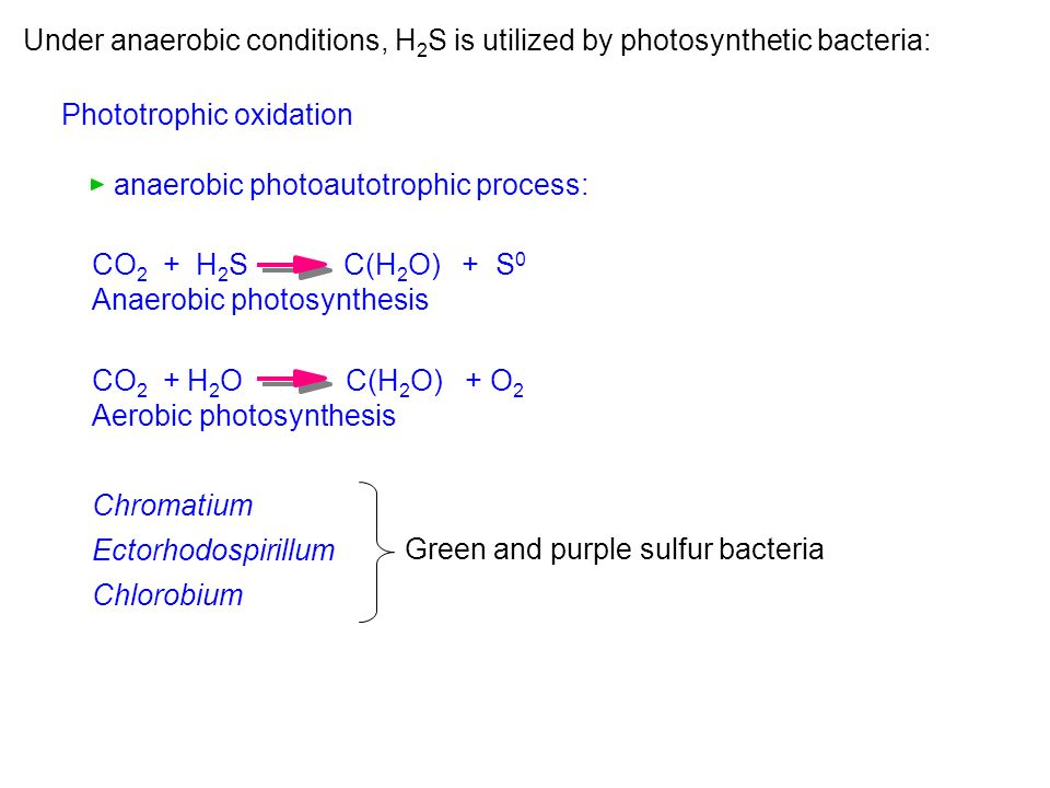 Under anaerobic conditions, H2S is utilized by photosynthetic bacteria: