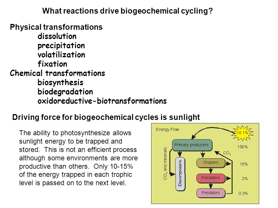 What reactions drive biogeochemical cycling