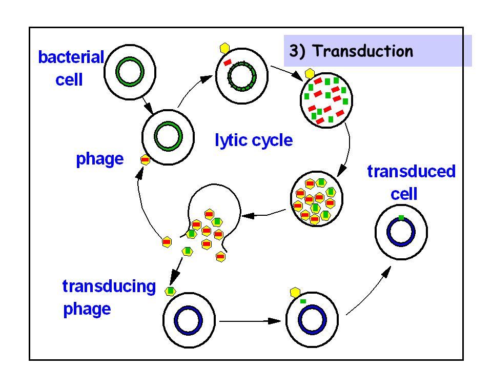 3) Transduction