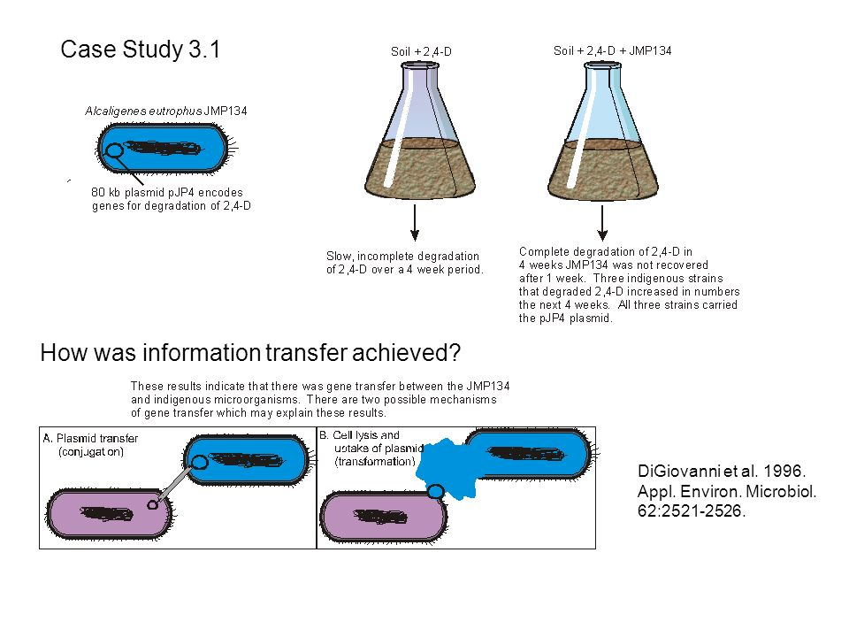 How was information transfer achieved