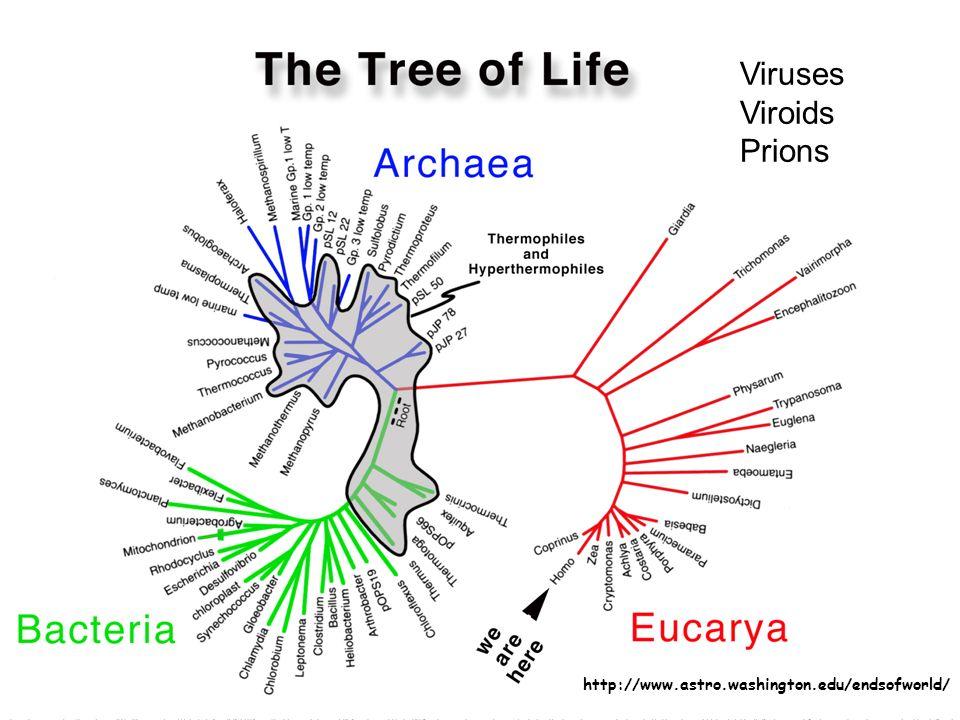 Viruses Viroids Prions http://www.astro.washington.edu/endsofworld/