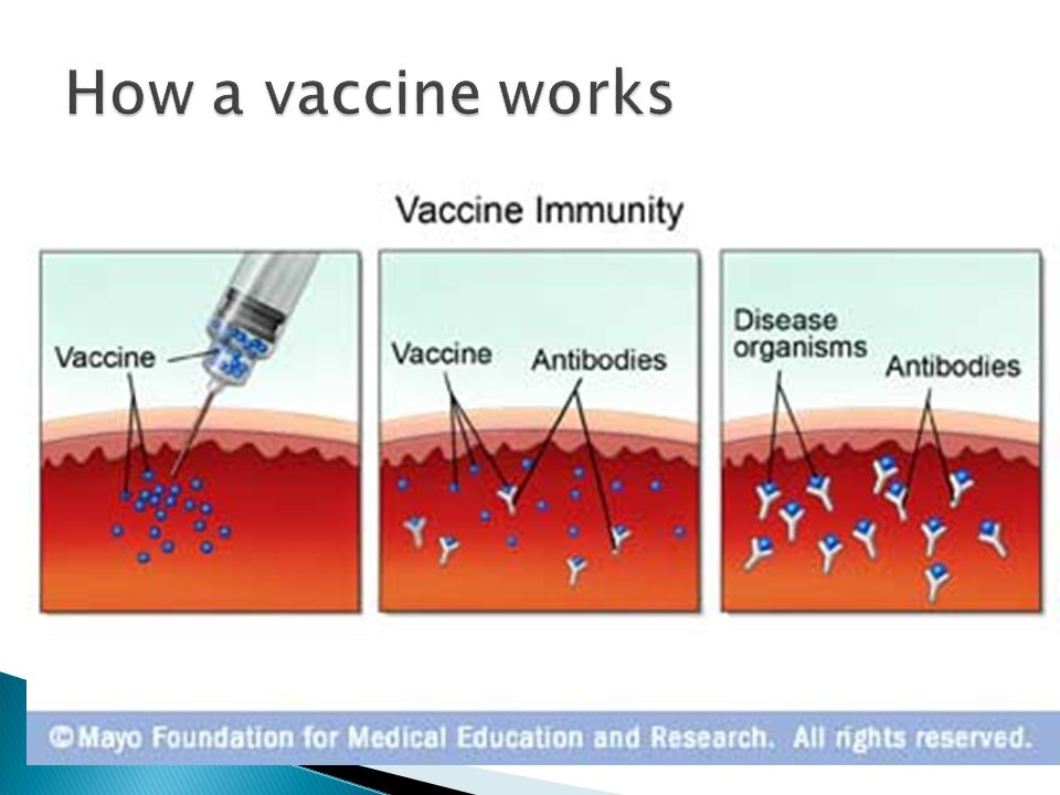 Virus And Cancer Ppt Download
