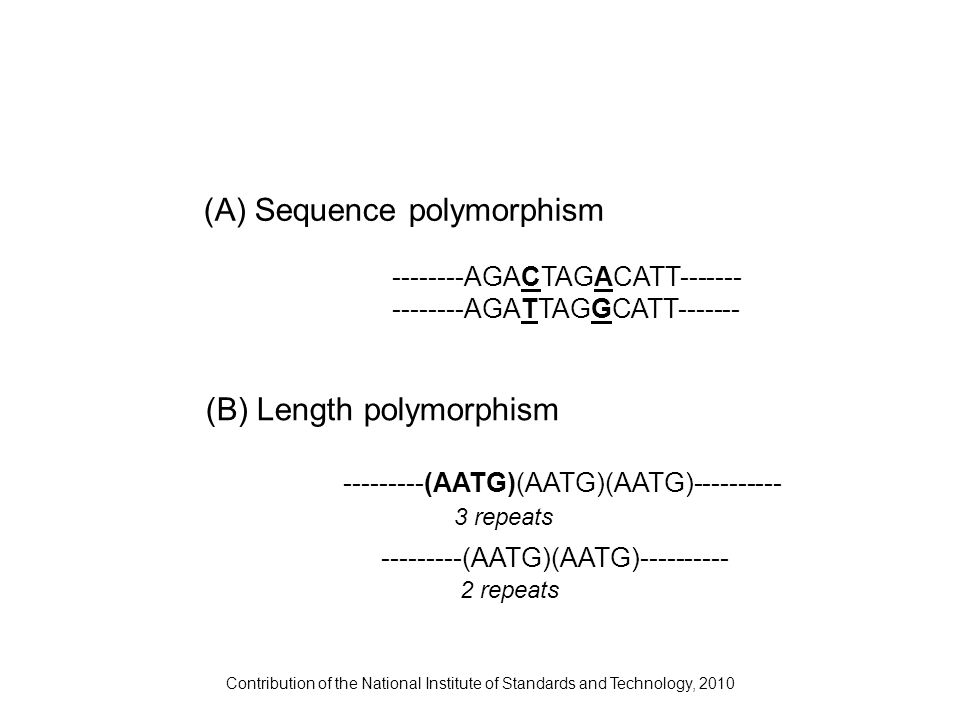J.M. Butler (2009) Fundamentals of Forensic DNA Typing