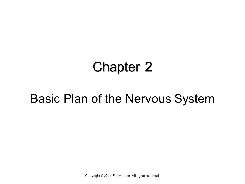 Chapter 2 Basic Plan of the Nervous System