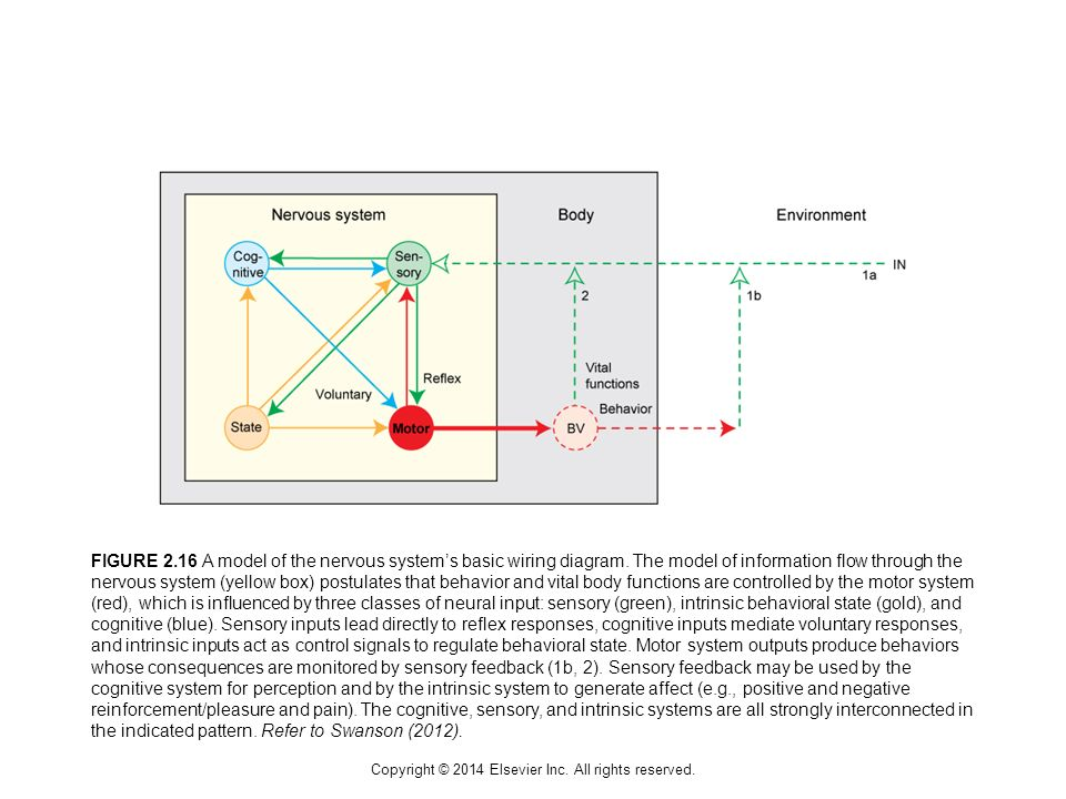 Copyright © 2014 Elsevier Inc. All rights reserved.