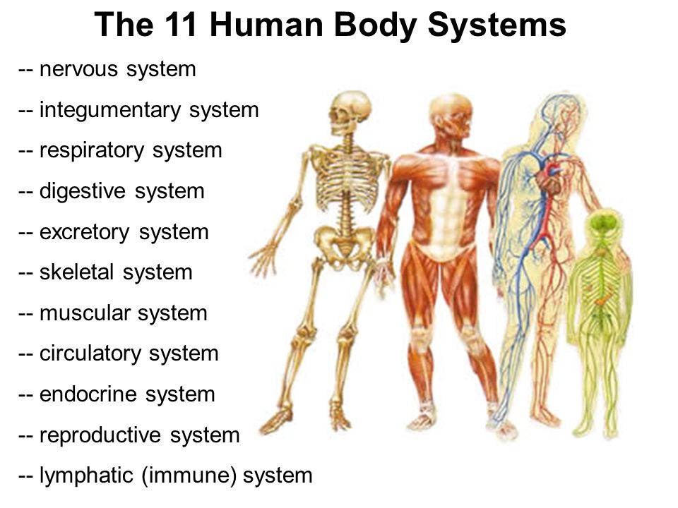 11 body systems - Vatoz.atozdevelopment.co