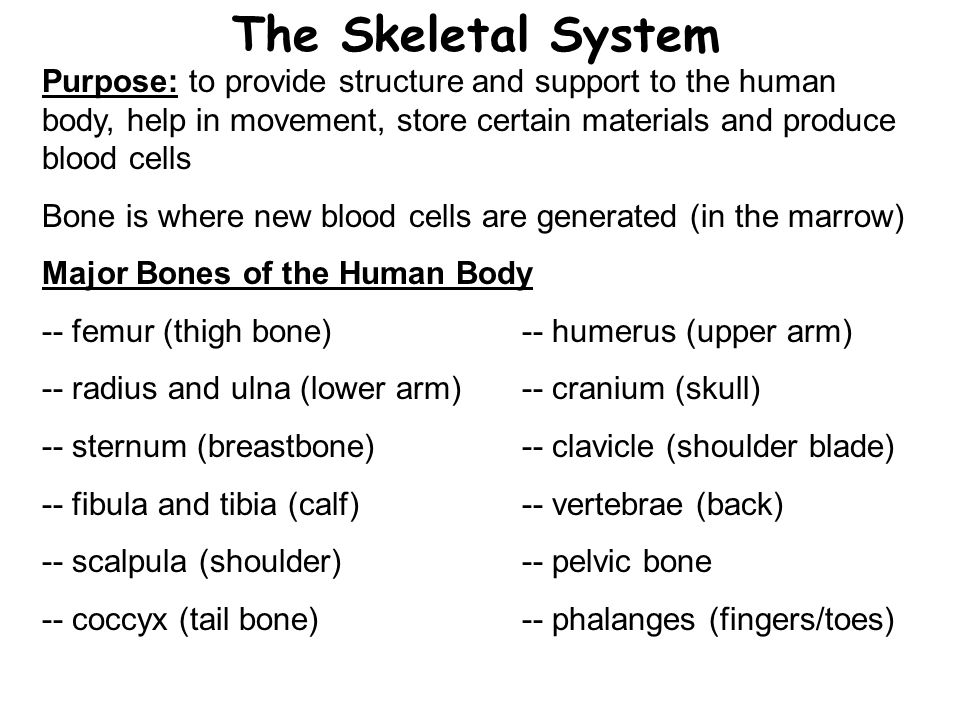 The Skeletal System Purpose: to provide structure and support to the human body, help in movement, store certain materials and produce blood cells.