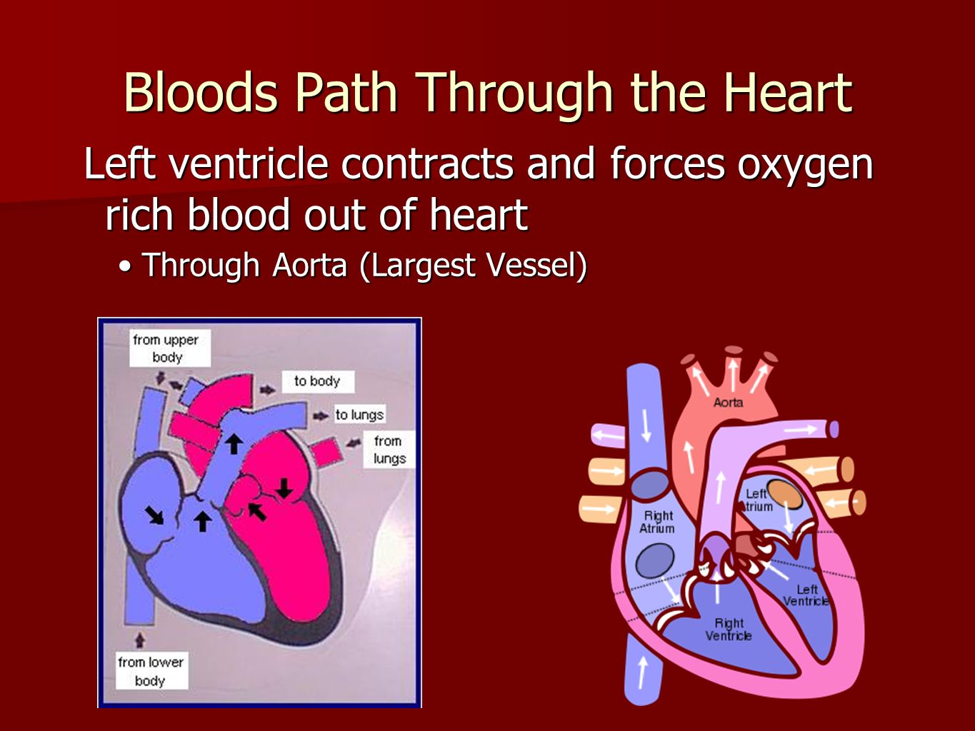 The Circulatory System - ppt video online download - photo #36