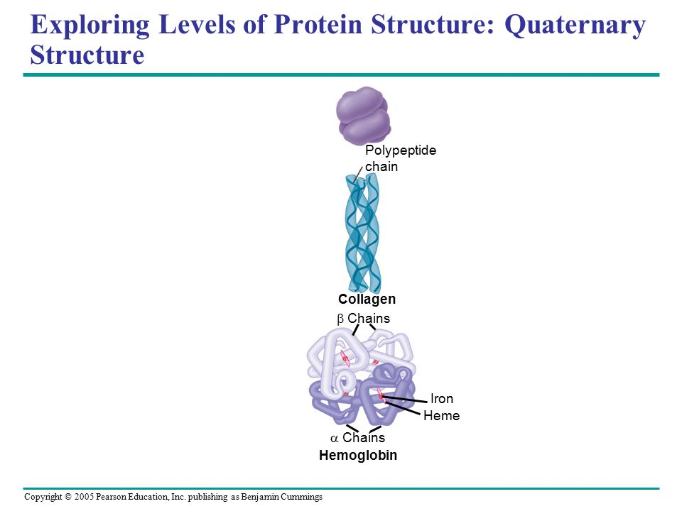 compare the structure and function of collagen and haemoglobin essay Structure and function of the heart physical education essay collagen fibres then erythrocytes contain a globular protein called haemoglobin which allows.