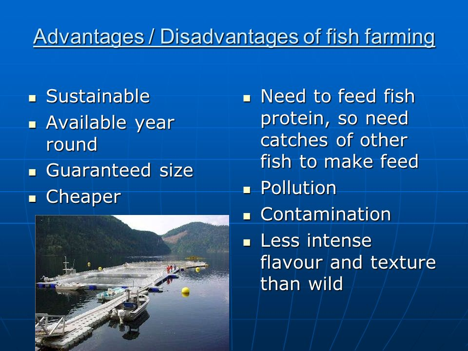 Pros of fish farming best fish 2017 for Fish farming pros and cons