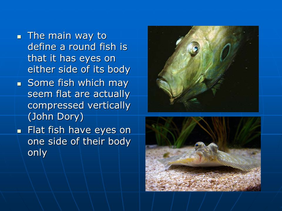 Round fish vrq2 theory unit 711 upk ppt video online download for Fish on main
