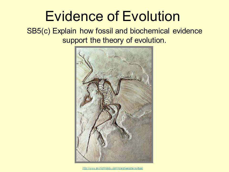 4 Main Theories of Evolution (explained with diagram and tables) | Biology