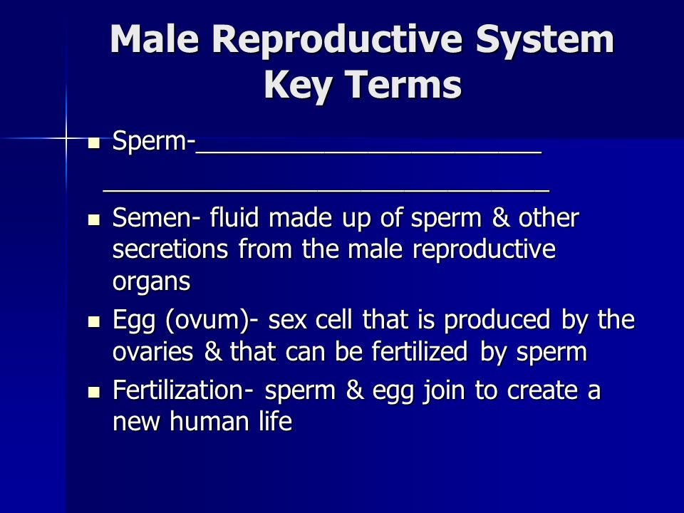Male Reproductive System Key Terms