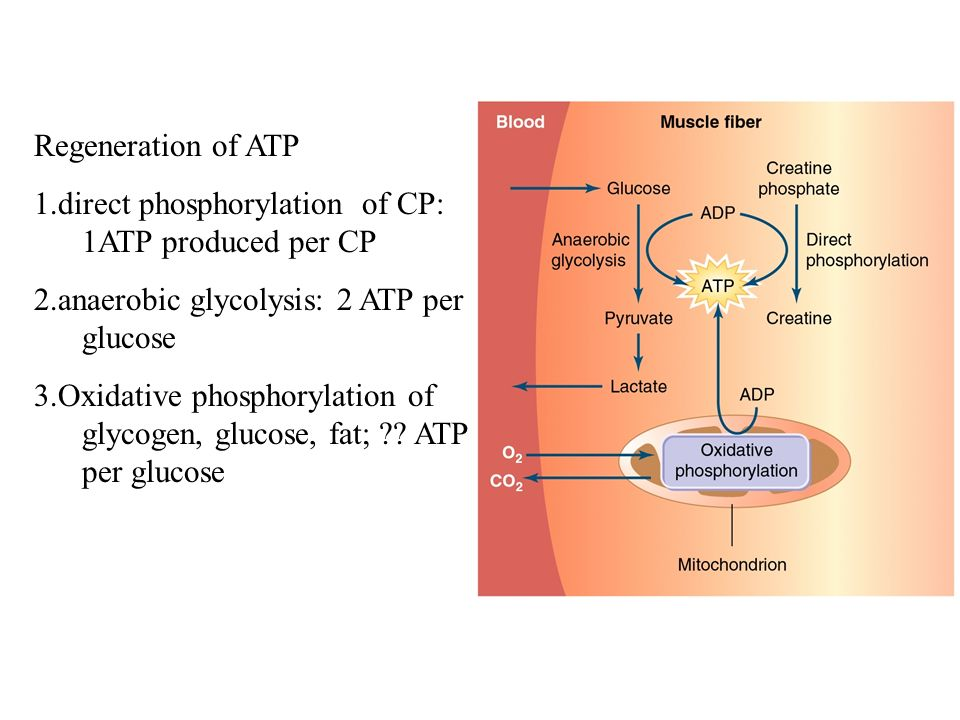 atp cp pathway The 26s proteasome is a 25-mda, atp-dependent multisubunit  (ups), the  major pathway for intracellular protein degradation in eukaryotic cells (1, 2)   both ends of the cp associate with 19s rps, which are responsible.