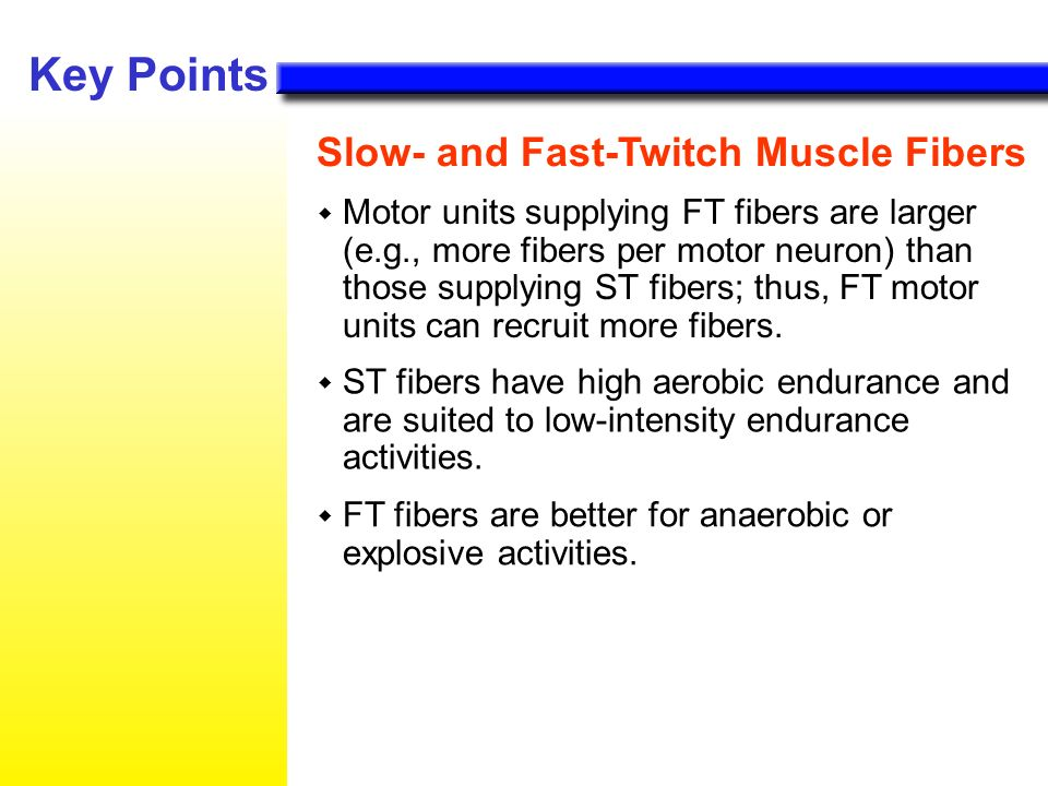 twitch muscle fibers We all know that we use our muscles to exercise and to keep our bodies functioning but, did you know that you're born with certain types of muscle fibers in certain amounts.