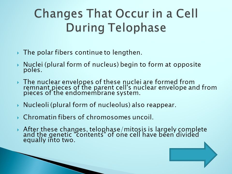 Prophase Metaphase Mitosis START Anaphase Telophase ppt video ...