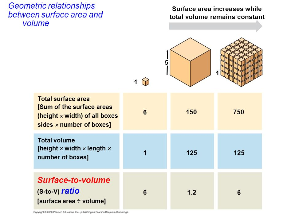 discuss the relationship between cell size and ratio of surface area to volume