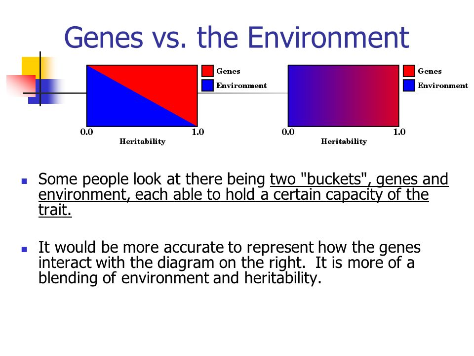 genes vs. environment essay The question whether genetics or environment help  argumentative essay on nature vs  while some behavioral traits can be traced back to genes, the environment.