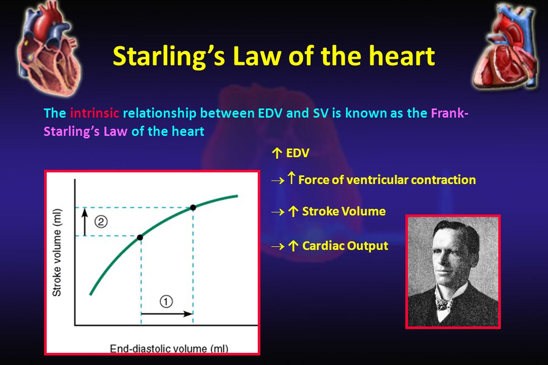 relationship between end diastolic volume and stroke variation
