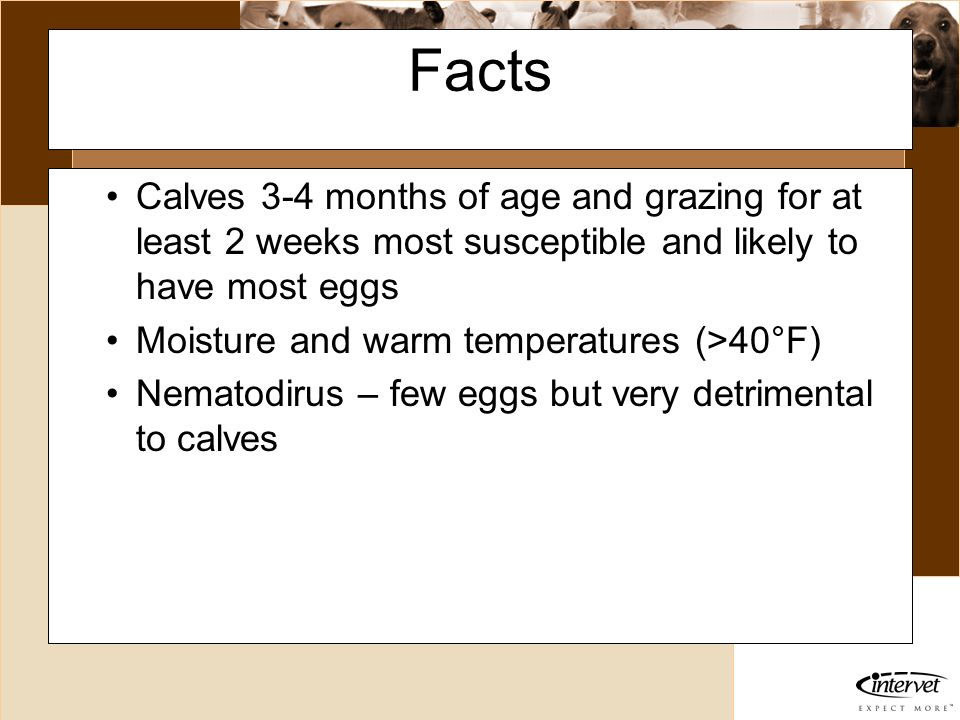 FactsCalves 3-4 months of age and grazing for at least 2 weeks most susceptible and likely to have most eggs.