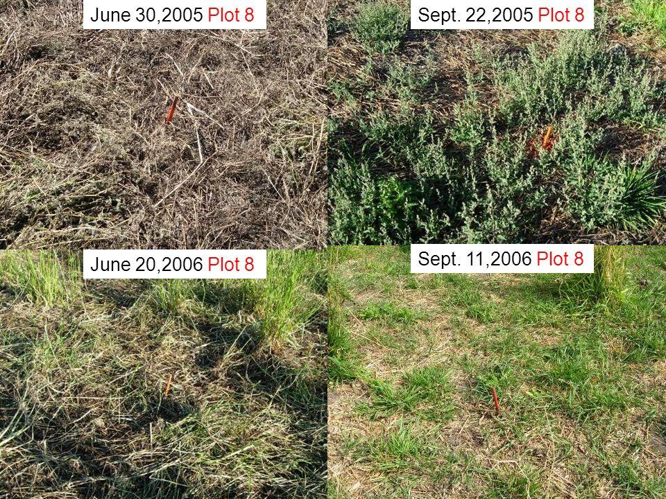 June 30,2005 Plot 8 Sept. 22,2005 Plot 8 Sept. 11,2006 Plot 8 June 20,2006 Plot 8