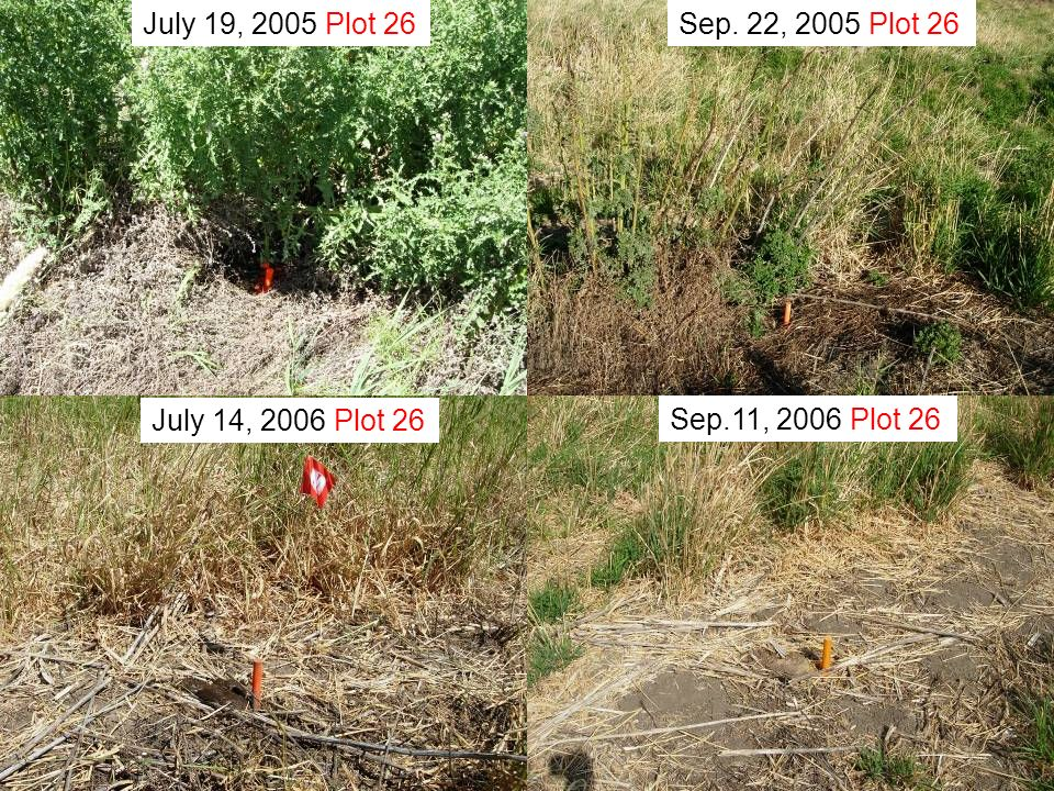 July 19, 2005 Plot 26 Sep. 22, 2005 Plot 26 July 14, 2006 Plot 26 Sep.11, 2006 Plot 26