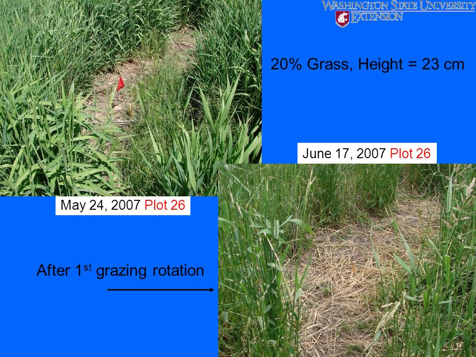 After 1st grazing rotation