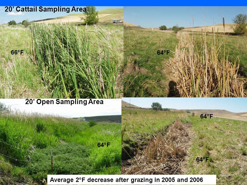 20' Cattail Sampling Area