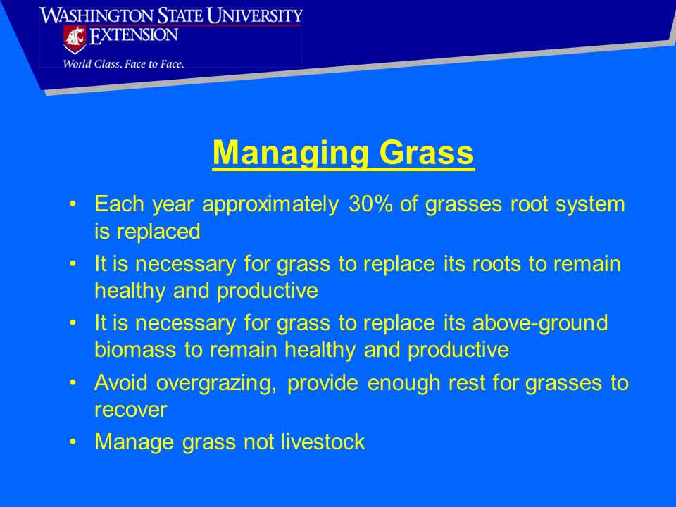 Managing Grass Each year approximately 30% of grasses root system is replaced.