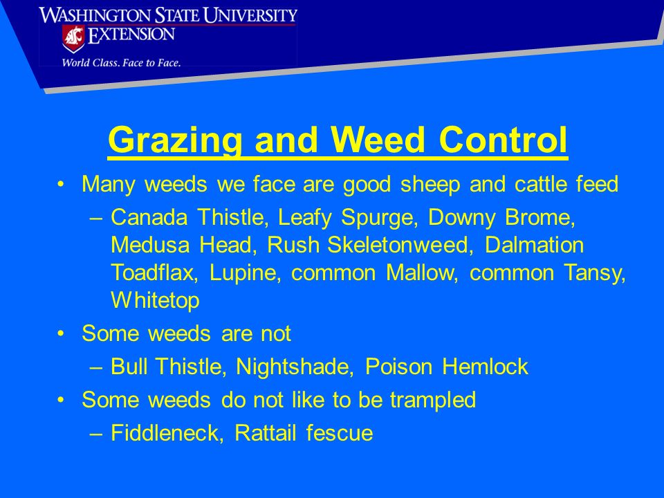 Grazing and Weed Control