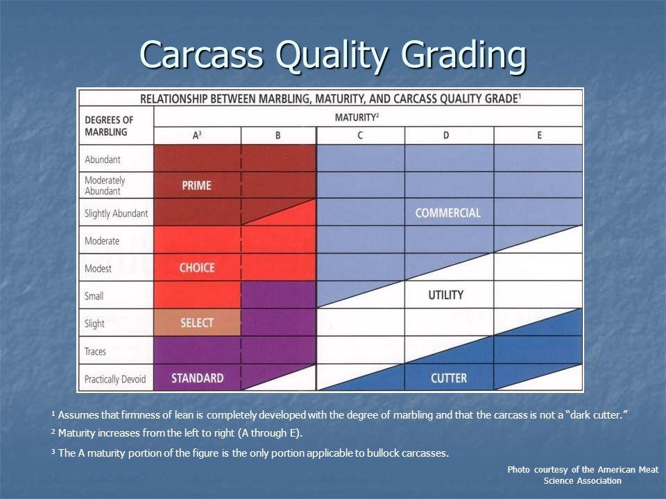 Carcass Quality Grading