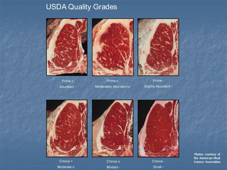 Photos courtesy of the American Meat Science Association
