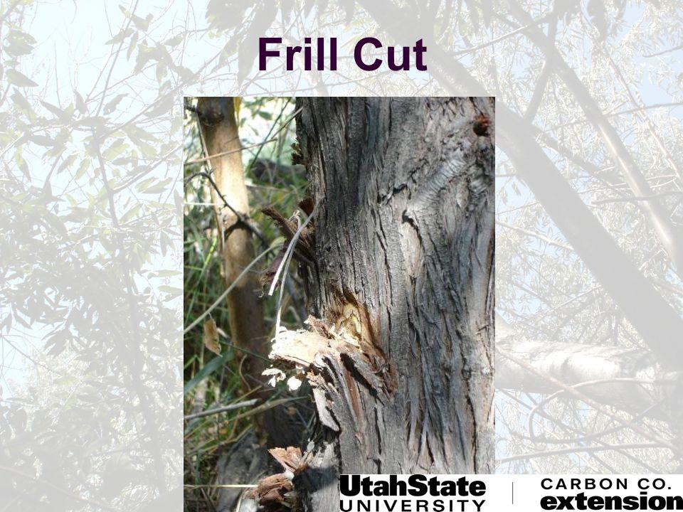 Frill Cut