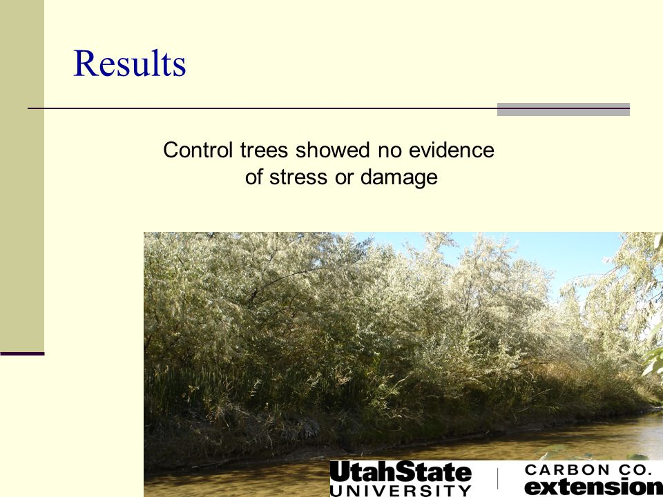 Control trees showed no evidence of stress or damage