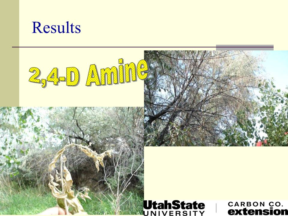 Results 2,4-D Amine