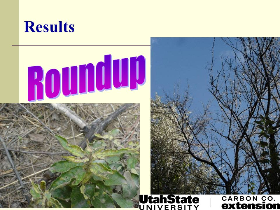 Results Roundup